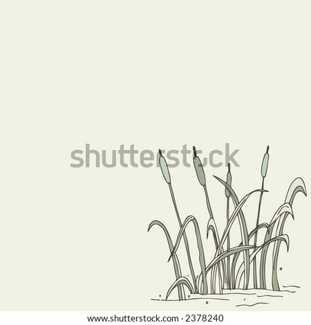 reed illustration - stock vector