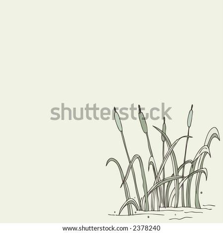 reed illustration - stock vector