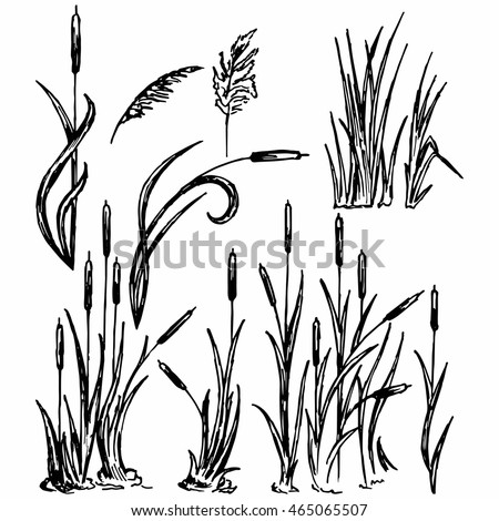 free printable coloring pages cattails plants   Cattail Stock Images, Royalty-Free Images & Vectors ...