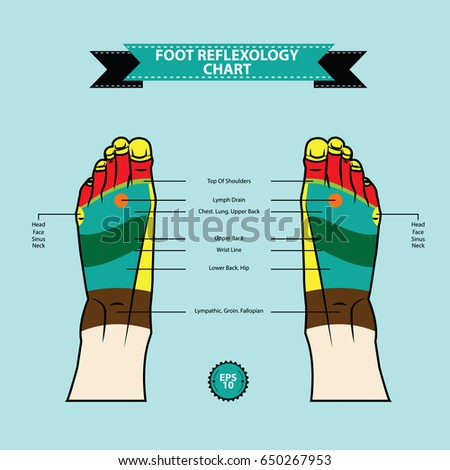 Reflexology chart body anatomy foot linking stock vector 650267953 reflexology chart of body anatomy foot linking with description of the corresponding function of ccuart Image collections