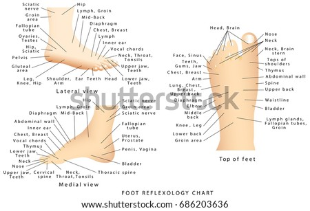 Reflexology chart reflex zones feet side stock vector 2018 reflex zones of the feet side views top of feet ccuart Image collections