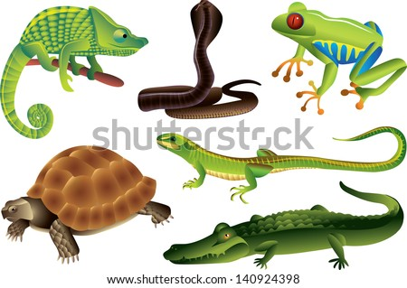reptiles and amphibians vector set - stock vector