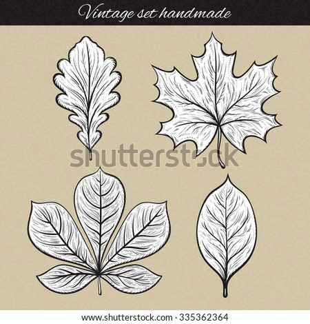 Retro set of 4 leaf sketch handmade. Vintage leaves. Vintage leaves engraving. Leaves for frames and design. Retro design elements. Isolated detailed tree leaves. Oak and maple, chestnut and rowan - stock vector