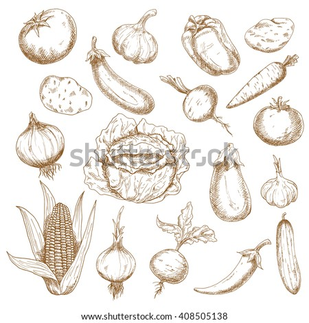 Retro sketches of cabbage, potatoes, tomatoes, garlic, eggplants, onions, corn, cucumber, beets, carrot, cayenne and bell peppers vegetables. Agriculture, farm, vegetarian food theme design usage   - stock vector