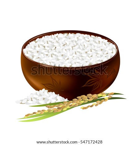 Rice bowl. Hand drawn vector illustration of short-grained rice with panicle on white background