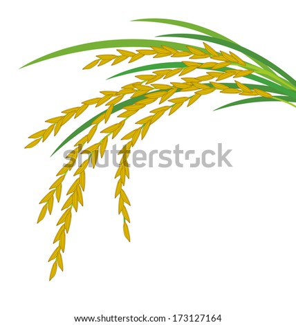 Rice plant Stock Photos, Images, & Pictures | Shutterstock