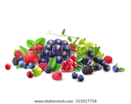 Ripe Berries Template with grape gooseberry strawberry blackberry cranberry bilberry black currant raspberry isolated vector illustration
