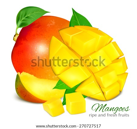 Ripe fresh mangoes. Vector illustration