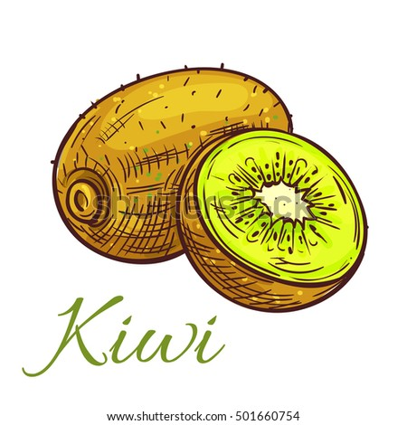 Ripe kiwi fruit sketch. Tropical green kiwi with juicy slice isolated icon for cocktail menu, dessert recipe or farm market design