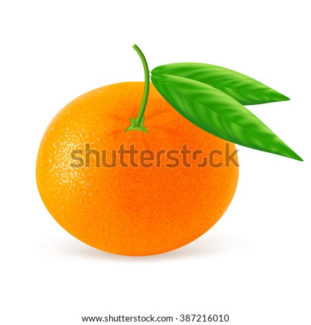 Ripe mandarin or tangerine with leaf isolated on white background. Realistic vector illustration.