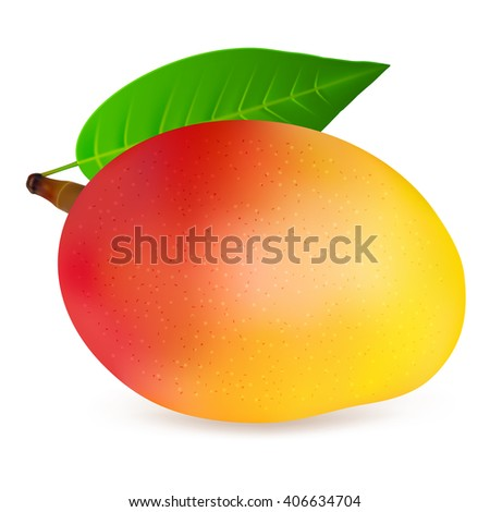 Ripe mango fruit with leaf isolated on white background. Realistic vector illustration. - stock vector