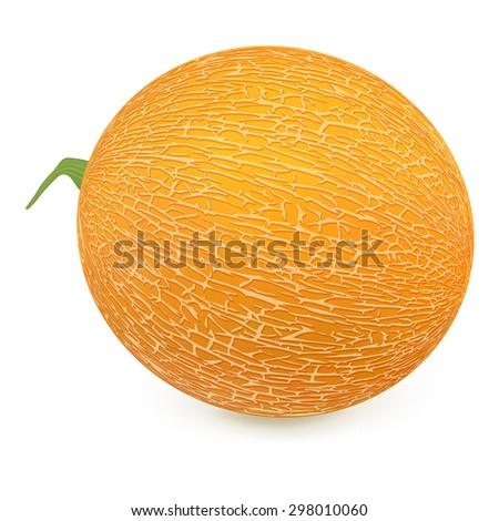 Ripe melon on a white background.Vector illustration. - stock vector