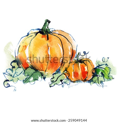 ripe orange two pumpkins with green leaves, vegetable, autumn harvest, watercolor sketch/ vector illustration - stock vector