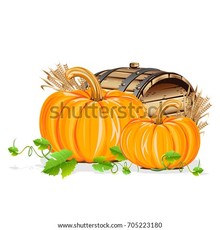 Ripe pumpkin. Realistic illustration isolated on white background.