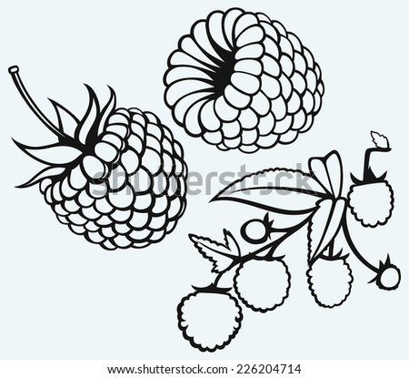 Ripe raspberry with leaf isolated on blue background - stock vector