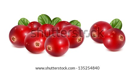 Ripe red cranberries with leaves and water drops. vector illustration