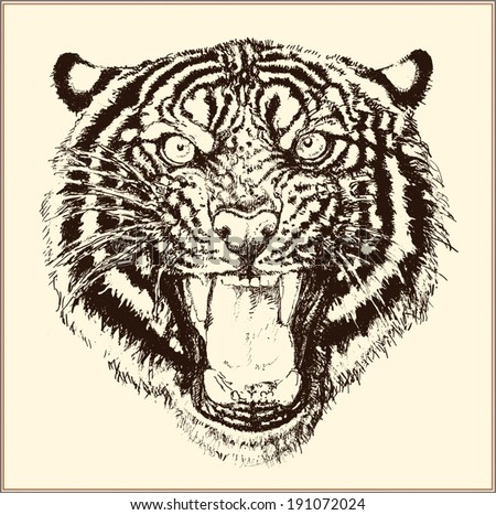 Roaring tiger head - stock vector
