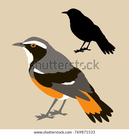 Bird Robin Silhouette Stock Images, Royalty-Free Images ...