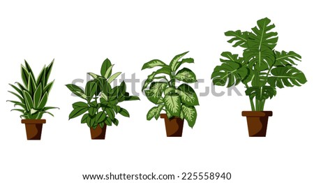 room plant on white background - stock vector