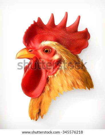 Rooster head, realistic vector illustration - stock vector