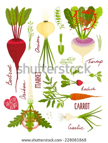 Root Vegetables with Greens Signs and Symbols Design Collection. Market gardening colorful designer set illustration. Layered vector EPS8 - stock vector