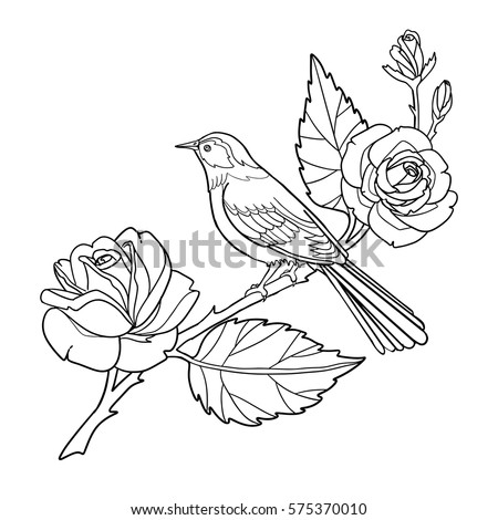 Rose And Bird Coloring Book Page Hand Drawn Outline Contour Flowers Animal Vector Illustration