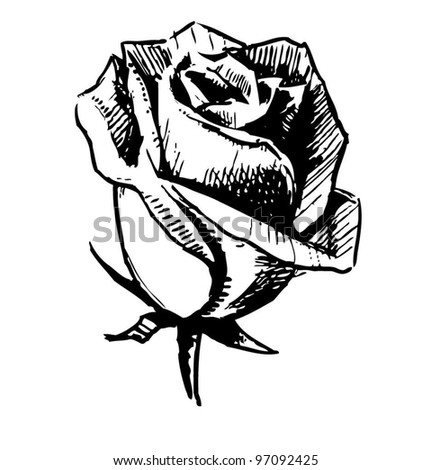 Rose bud. Sketch vector illustration