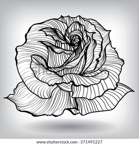 Rose Floral Elements for design, EPS10 Vector background