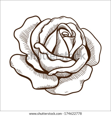 Rose flower isolated on white. Hand drawn sketch. Eps 10 vector illustration. - stock vector