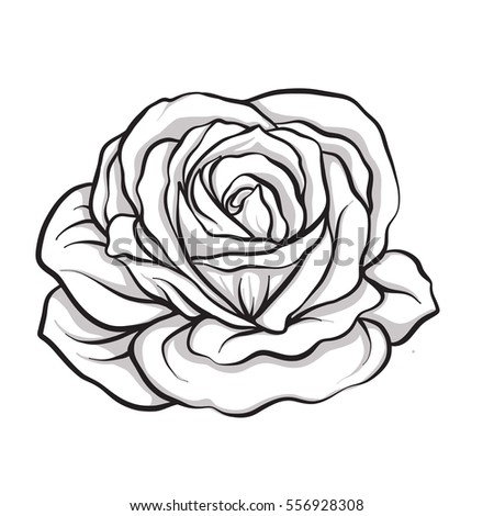 Rose Sketch Stock Images Royalty Free Images Vectors Shutterstock
