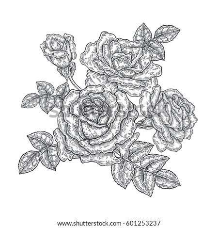 Rose flowers and leaves in vintage style. Hand drawn botanical vector illustration. Floral design elements