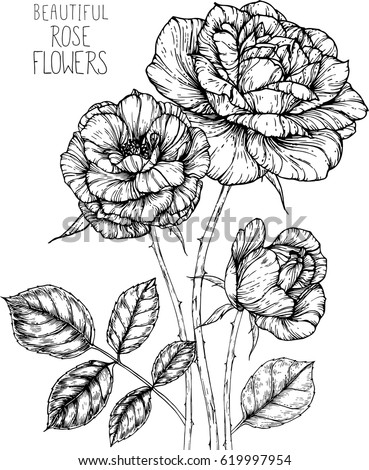 Rose Flowers Drawing Illustration Vector And Clip Art