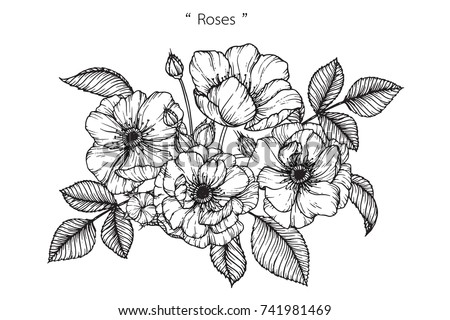 Rose flowers drawing lineart on white stock vector royalty free rose flowers drawing with line art on white backgrounds mightylinksfo