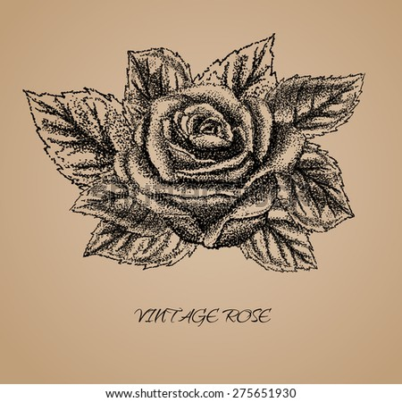 Rose - hand drawn Old-style vector illustration - stock vector
