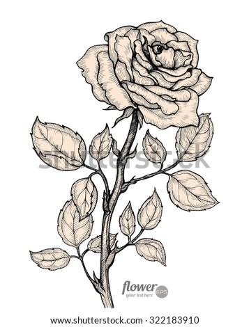 Rose. Vector. Hand drawn artwork. Love bohemia concept for wedding invitations, cards, tickets, congratulations, branding, boutique logo, label. Gift for young girl and women. Black and white, beige - stock vector