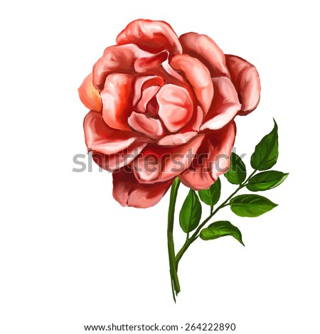 rose vector illustration  hand drawn  painted watercolor  - stock vector