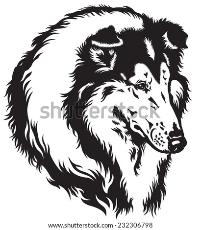rough or long-haired collie dog head. Black and white image  - stock vector