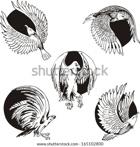 Round designs with eagles and falcons. Set of black and white vector illustrations.