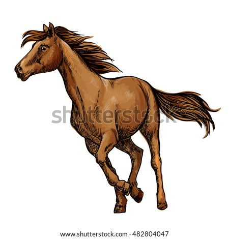 Running horse sketch with galloping brown arabian racehorse. Equestrian sporting competition, horse racing or t-shirt print design