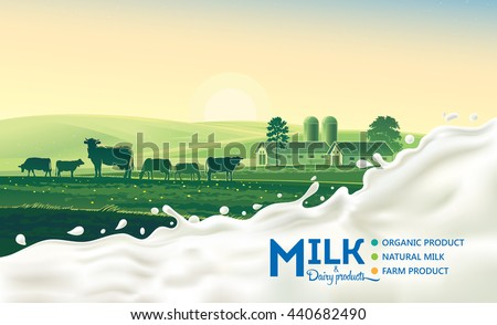Rural landscape with cow and splash of milk. Morning sun and dawn.