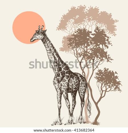 Safari sunset background, nature scenery, trees and giraffe - stock vector