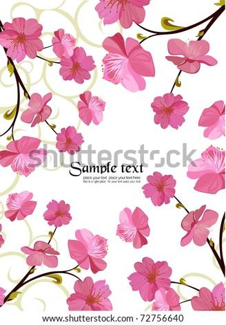 Sakura blossom - stock vector