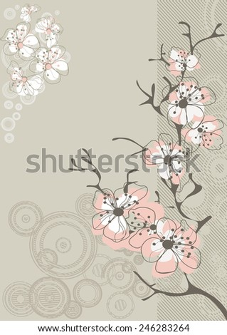 sakura blossom on gray background - stock vector
