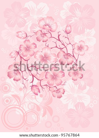 sakura  blossom, vector illustration