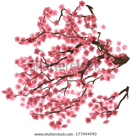 sakura cherry branches interesting and good looking - stock vector