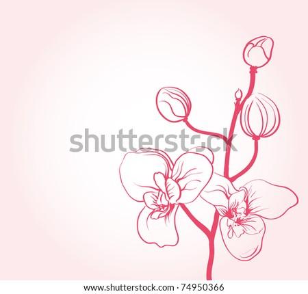 sakura flowers - stock vector