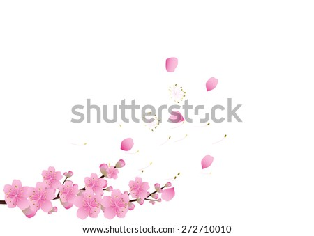 Sakura flowers background . cherry blossom isolated white background - stock vector