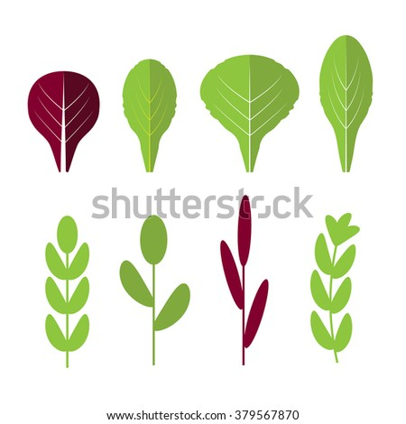 Salad ingredients. Leafy vegetables vector flat icons set. Organic and vegetarian, borage and radichio - stock vector