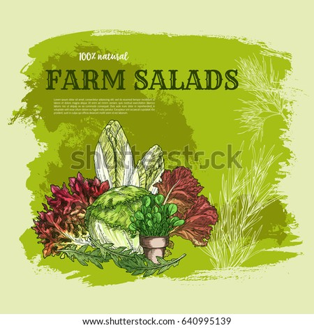Salad Leaf And Green Vegetable Sketch Poster Fresh Iceberg Lettuce Chinese Cabbage Red