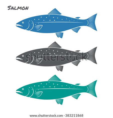 Salmon fish vector illustration on white background - stock vector